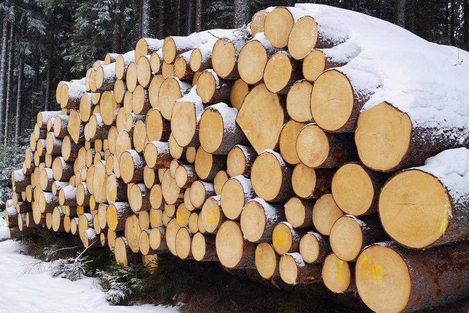 Как выбирали и заготавливали древесину в стародавние времена