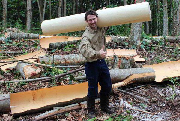 Самая легкая древесина